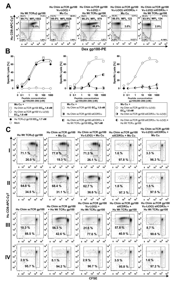 Prevention of residual mispairing in human T-cells by incorporating the Vα-Li(Vβ) disulfide bond into a human scTCR gp100.