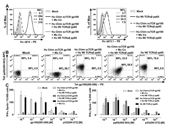 Dual specificities of a scTCR gp100 and a dcTCR pp65 in Jurkat-76.