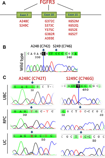 FGFR3 mutations identified in UCC tumors.