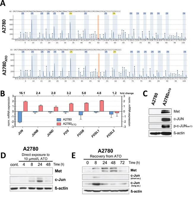 MET promoter methylation and targeting transcription factors.