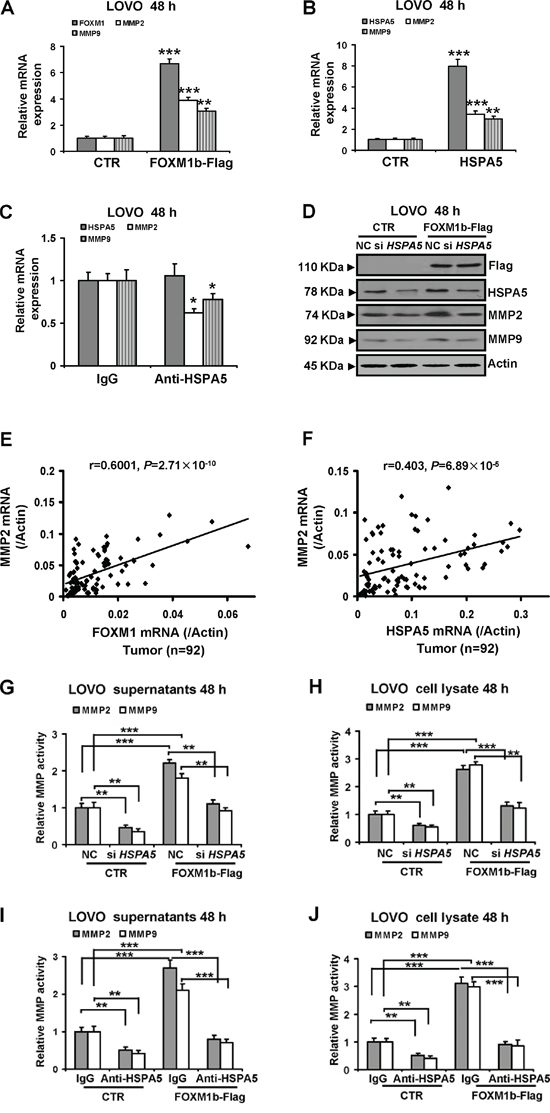 MMP2 and MMP9 expression and activities increased by FOXM1 are involved in cell-surface HSPA5.