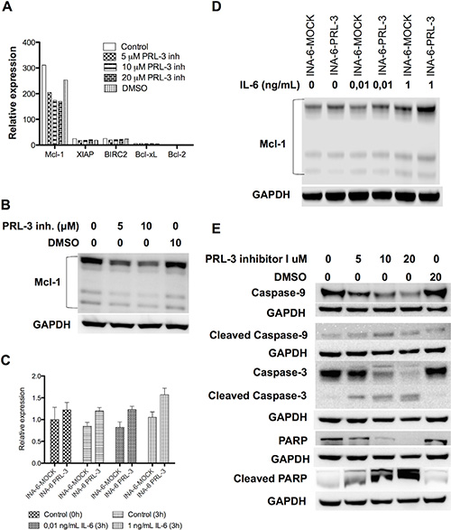 PRL-3 increases Mcl-1 expression, and PRL-3 inhibition reduces Mcl-1 expression and induces activation of the intrinsic apoptotic pathway.