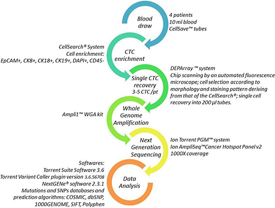 Workflow for single CTC detection and molecular analysis.