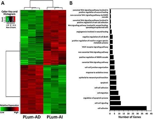 Microarray analysis of the differentially expressed genes between PLum-AD and PLum-AI cells.