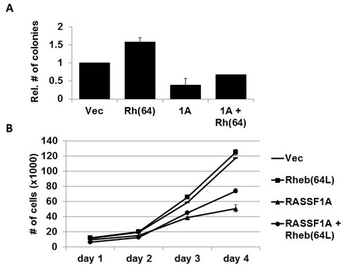Rheb-mediated growth enhancement is suppressed by RASSF1A.
