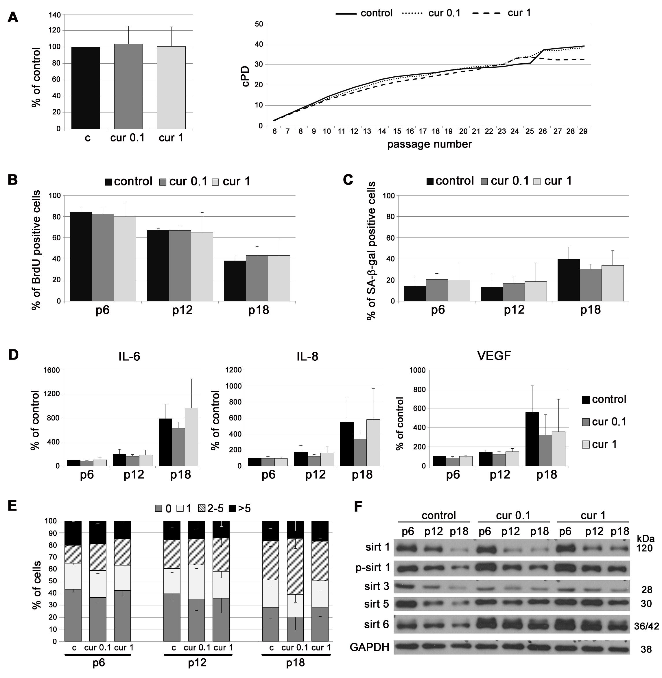 The impact of curcumin on replicative senescence of VSMC.