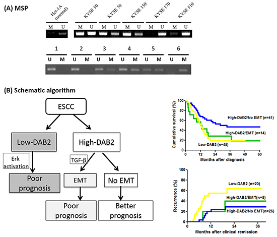 The methylation status of DAB2 promoter and the schematic algorithm demonstrated the three clinical ESCC phenotypes.