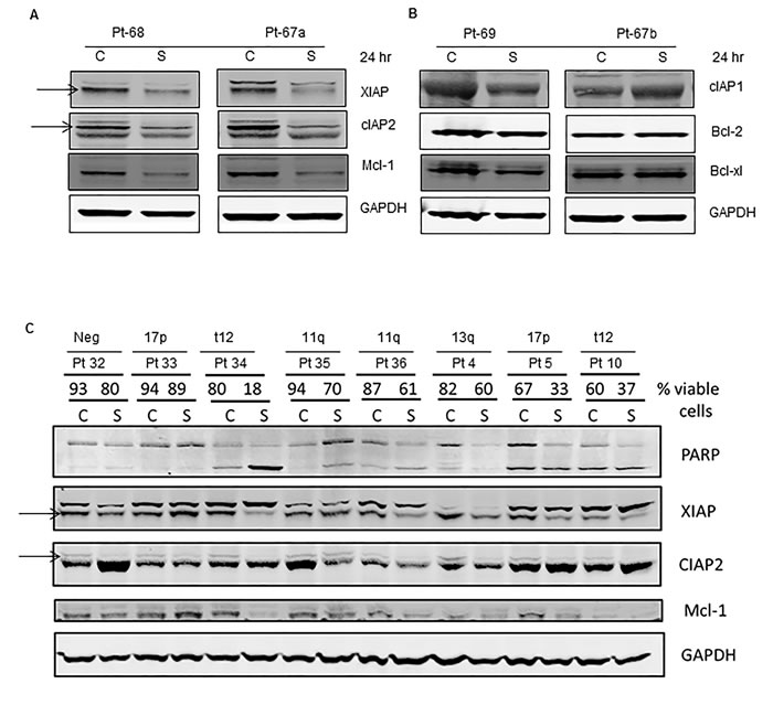 Degradation of IAPs and activation of caspases (8, 9, and 3) following smac066 treatment.