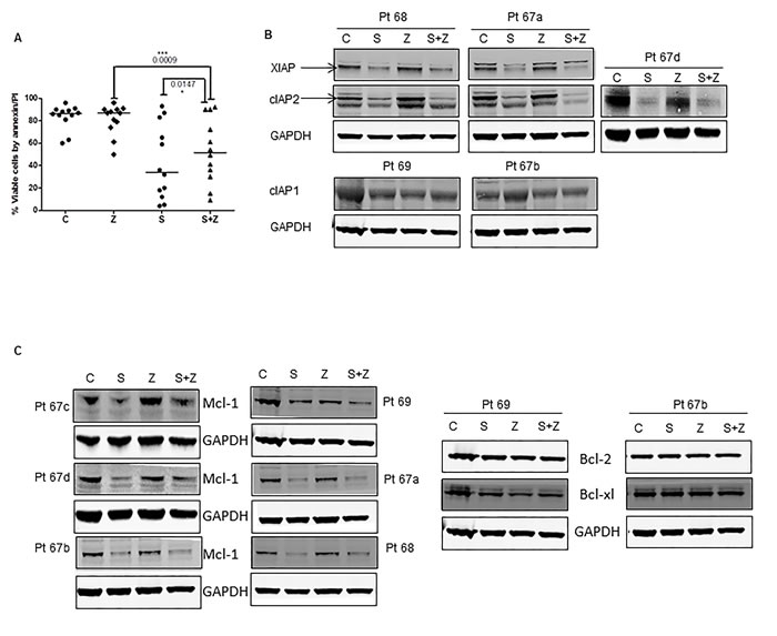 Effect of pan-caspase inhibitor Z-VAD-fmk on smac066-induced apoptosis.
