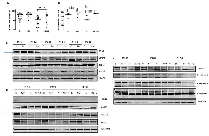 Effect of bone marrow and lymph node microenvironments on smac066-driven apoptosis.