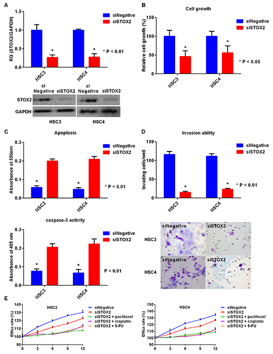 Effect of STOX2 knockdown treatment in OSCC cells.