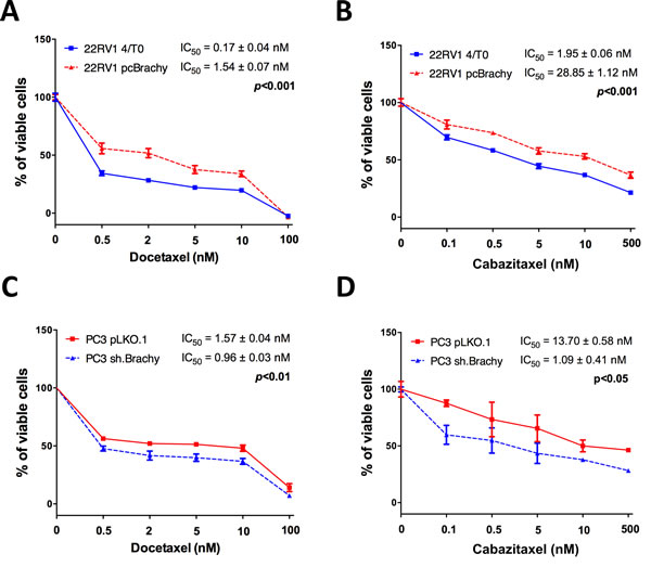 Brachyury promotes resistance to the cytotoxic drugs docetaxel and cabazitaxel.