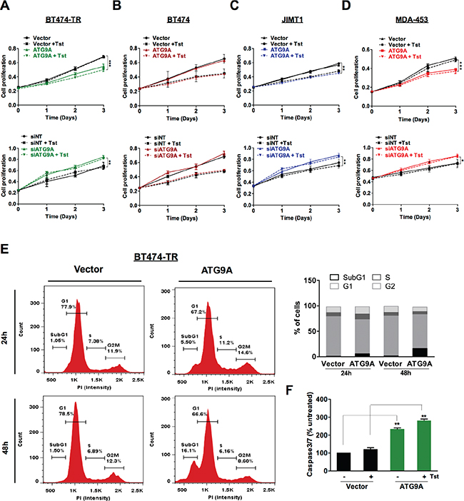 ATG9A overexpression represses cell proliferation and induces apoptosis in trastuzumab resistant cells.