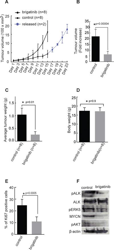 Effect of brigatinib in a xenograft neuroblastoma model.