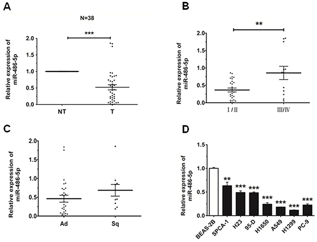 MiR-486-5p is downregulated in NSCLC tissues and cell lines.