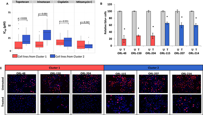 Cell lines from different gene expression clusters demonstrate differential response to specific inhibitors.