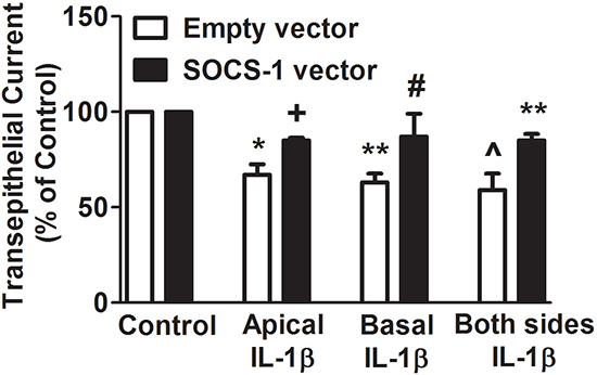 SOCS-1 overexpression suppresses IL-1β-mediated disruption of TEC on apical, basal as well as both surfaces of MLE-12 cells.