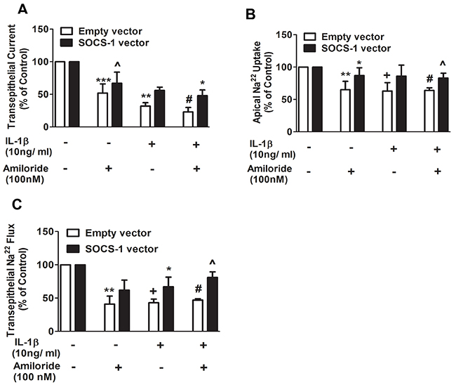 Apical 22Na and transepithelial 22Na flux are proteced by SOCS-1 overexpression.