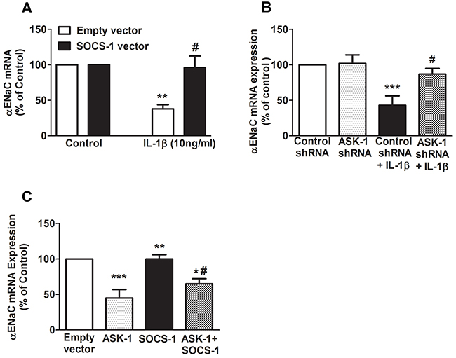 SOCS-1 rescues IL-1β mediated decrease of αENaC mRNA expression by ASK-1-dependent pathway.