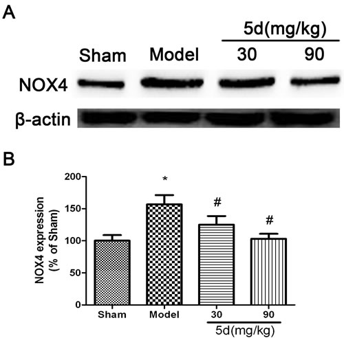 Effects of 5d on NOX4 protein level in the brains of rats after I/R.