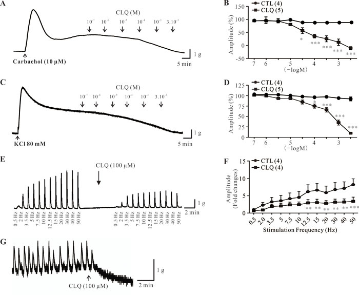 Effect of chloroquine on stimulus-induced and spontaneous contractions of human DSM strips.