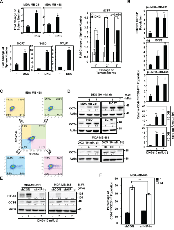 DKG promotes tumorigenic properties in BC cells.
