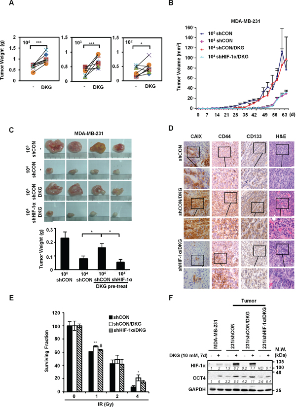 DKG augments the tumorigenic properties of BC cells in vivo.