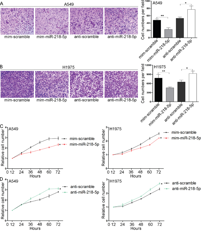 miR-218-5p inhibits the migration and proliferation of NSCLC cells in vitro.