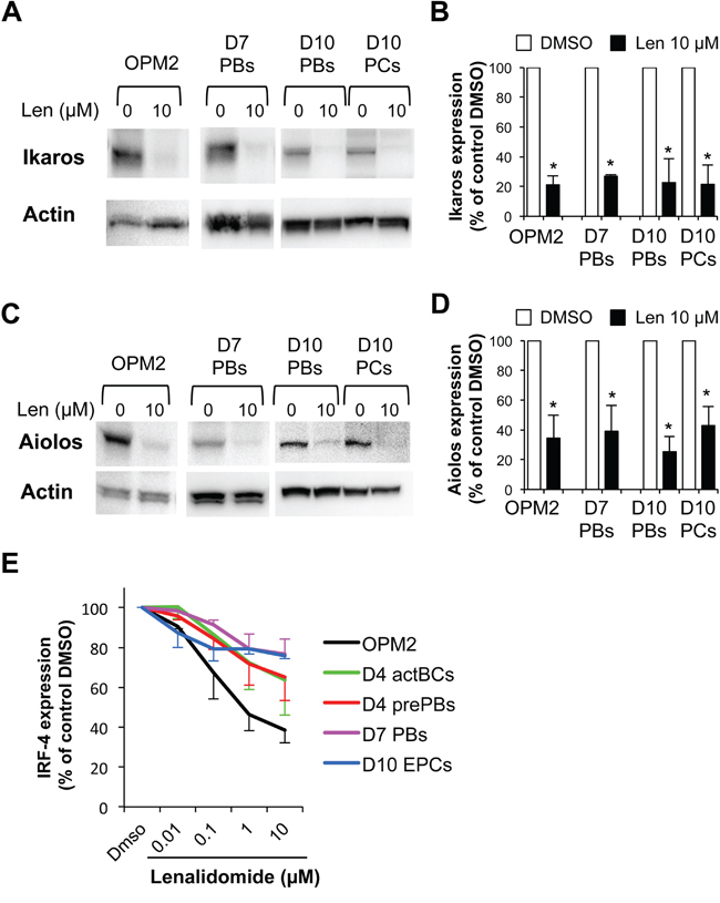 Oncotarget | Differential effects of lenalidomide during plasma cell