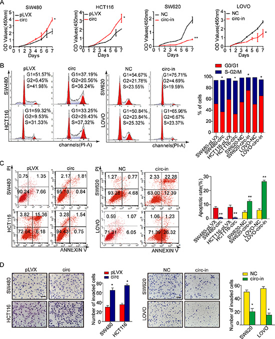 Circ_001569 promotes proliferation and tumor growth of CRC cells.