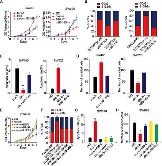 Circ_001569 promotes the proliferation and invasion of CRC cells by regulating miR-145 and its targets.