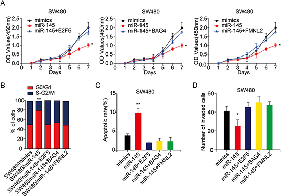 E2F5, BAG4 or FMNL2 plays crucial roles in miR-145 induced the proliferation and invasion of CRC cells.