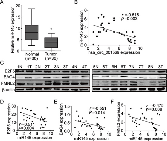 MiR-145 negatively correlates with circ_001569 or its targets.