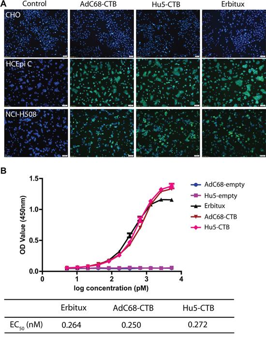 Biological activity of Ad-anti-EGFR antibodies.