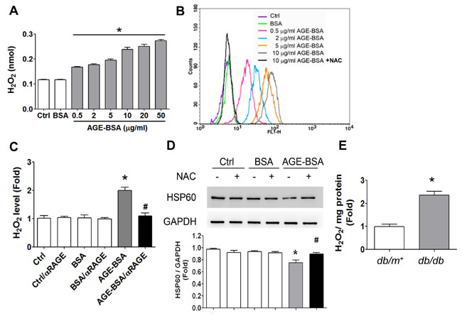 Oxidative stress is involved in the AGEs-RAGE axis-induced inhibition of HSP60 expression in β-cells.