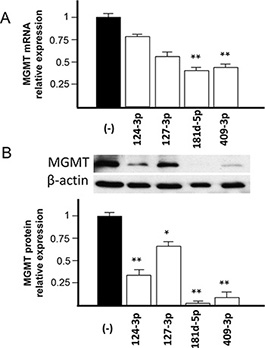 Effect of transfection of pre-miR-124-3p, -127-3p, -181d-5p and -409-3p on MGMT mRNA and protein expression in T98G glioblastoma cell line.