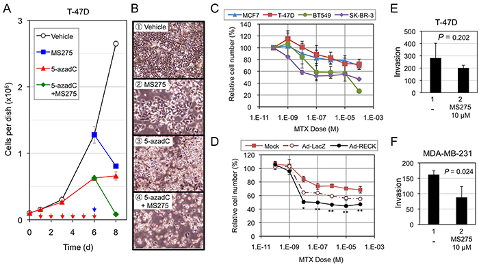 Effects of RECK-activation on the growth/survival of breast cancer cell lines.