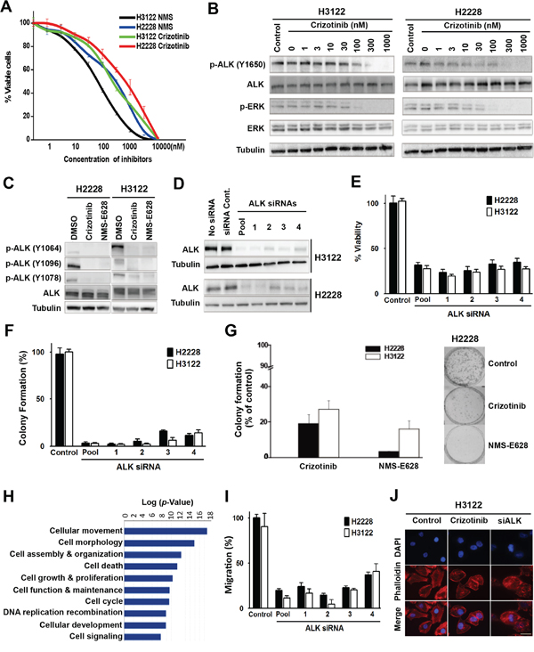 Effects of ALK inhibition in the EML4-ALK-positive NSCLC cells.
