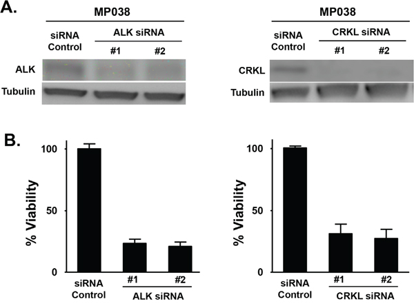 Effect of ALK and CRKL knockdown on ALK-positive MP038 primary NSCLC cells.