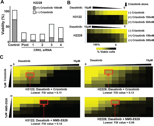 Dasatinib synergizes with ALK inhibitor to inhibit the viability of ALK-positive cells.