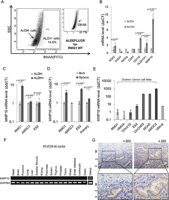 MMP10 expression in ovarian cancer and normal organs.