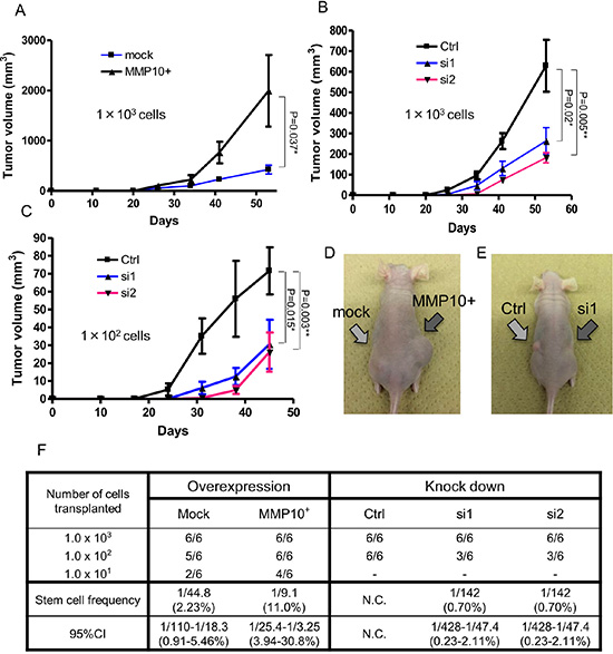 Tumorigenicity in vivo xenograft and limiting dilution assay.