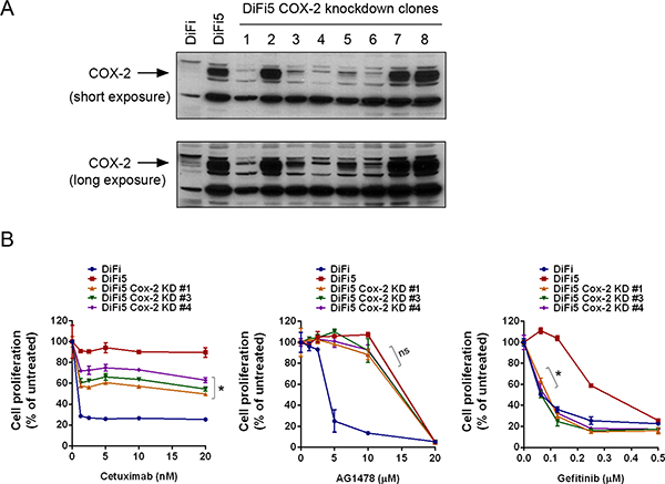 Knockdown of COX-2 differentially resensitizes DiF5 cells to treatment with cetuximab, AG1478, or gefitinib.