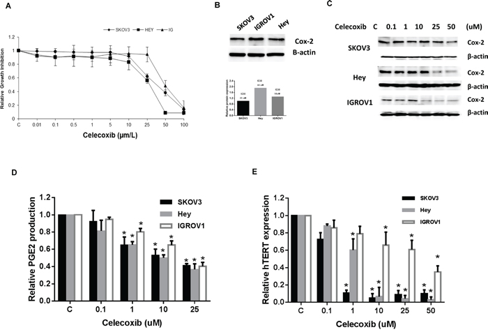Celecoxib inhibited cell proliferation in ovarian cancer cell lines.