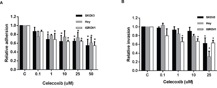 Celecoxib inhibited cell adhesion and invasion in ovarian cancer cells lines.