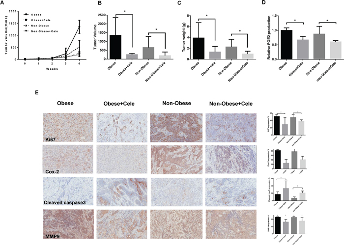 Celecoxib inhibited tumor growth in a genetically engineered mouse model of serous ovarian cancer (KpB mouse model).