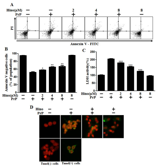 Hinokitiol attenuates PrP (106-126)-induced cytotoxicity in neuronal cells.