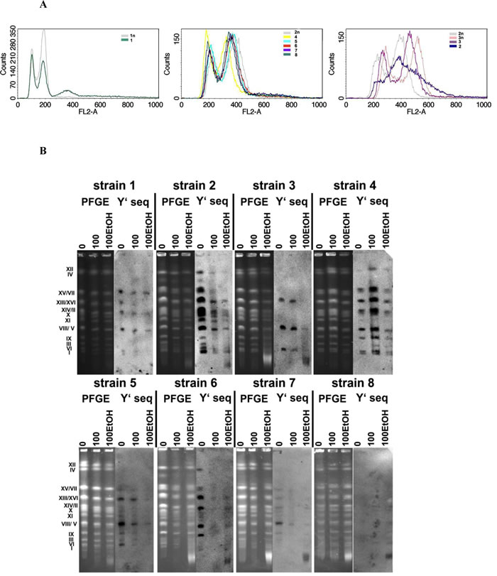 The ploidy analysis (A) and generation- and ethanol-mediated karyotype profiles and telomere status (B).