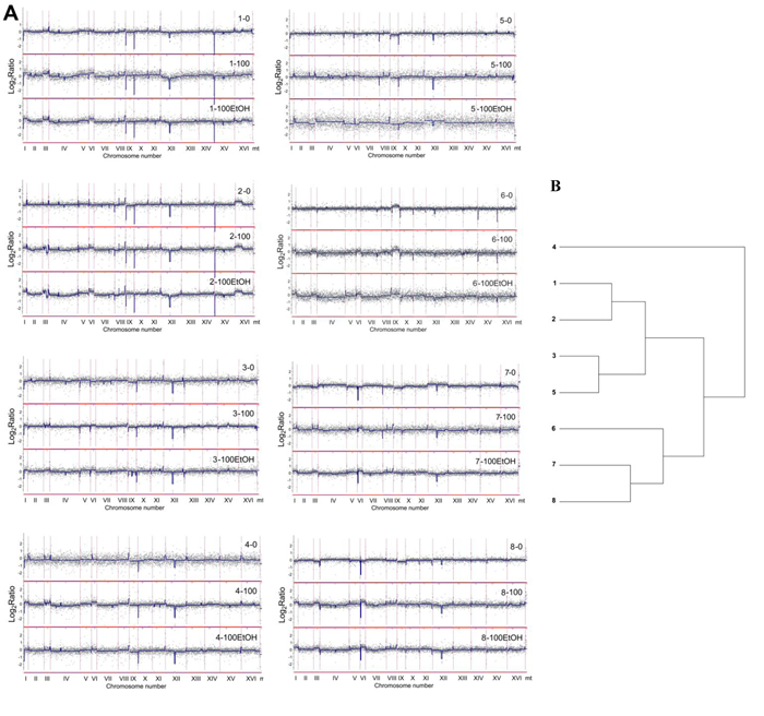 Analysis of the variability in the gene copy number of wine strains (1 to 8) using array-CGH.