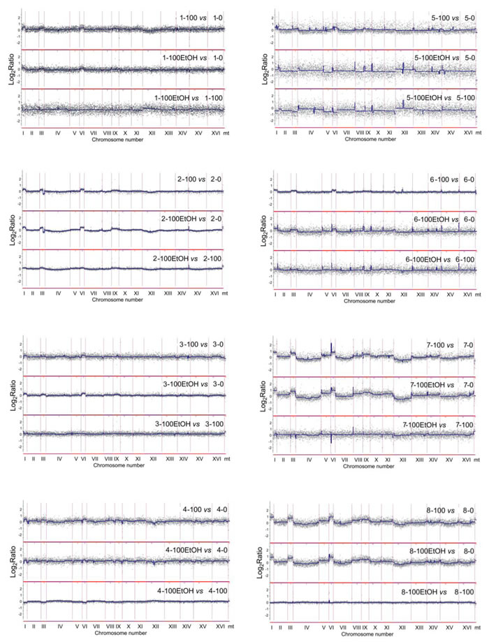 Generation- and ethanol-mediated changes in chromosome level using array-CGH.
